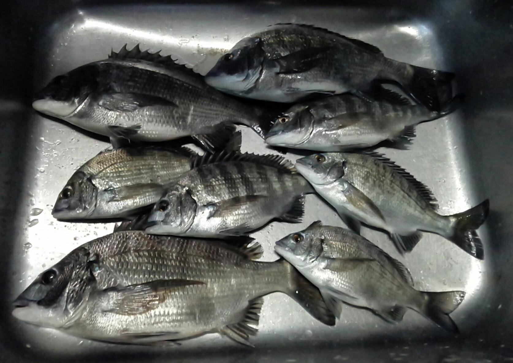 午後から各所で40㎝級の大物釣れる‼️サムネイル