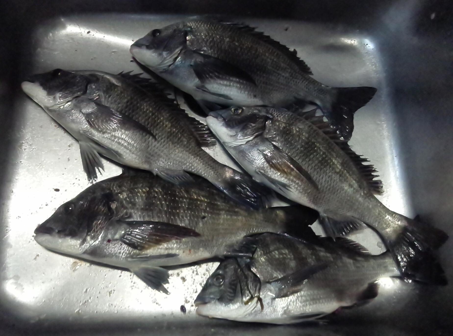 午後から釣れる冬型の釣りに完全移行‼️サムネイル