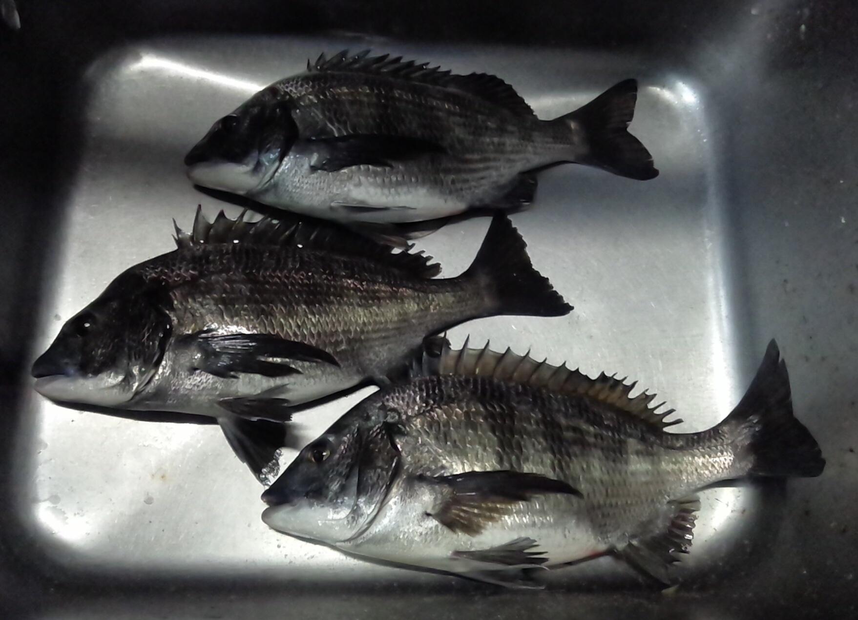 午後から40㎝級の大物釣れる‼️サムネイル