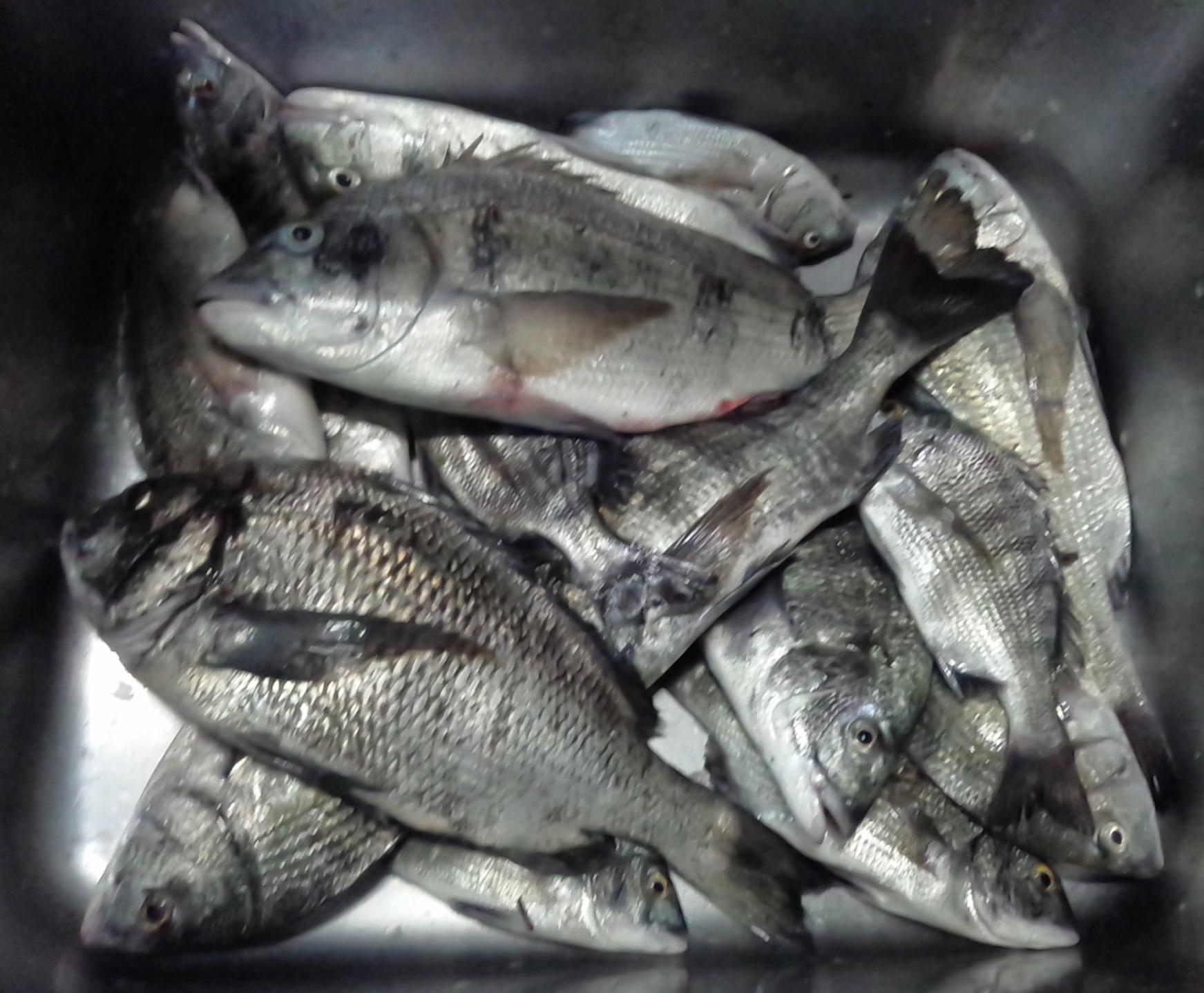 清水港黒鯛かかり釣りサマー大会開幕٩(^‿^)۶サムネイル