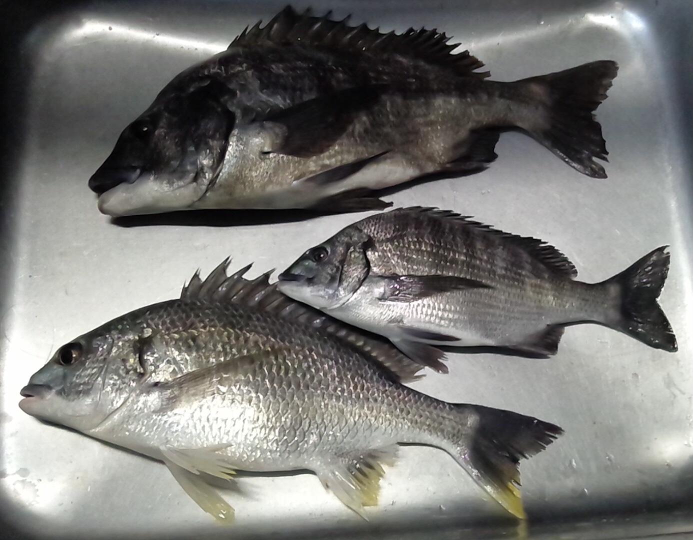 午後から大物釣れる٩(^‿^)۶サムネイル