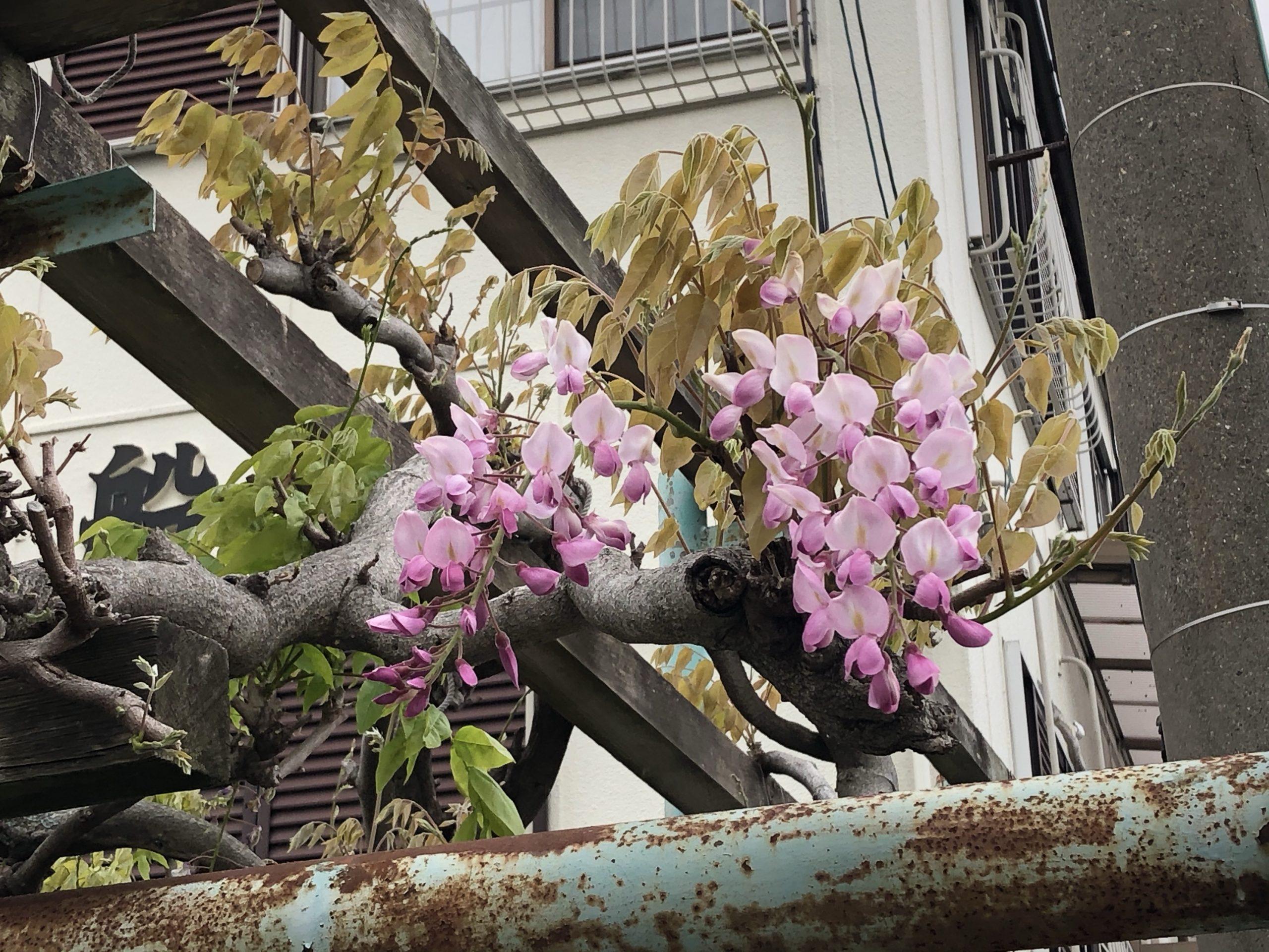 クロダイが釣れませが、バラシが何回かあり-_-bサムネイル