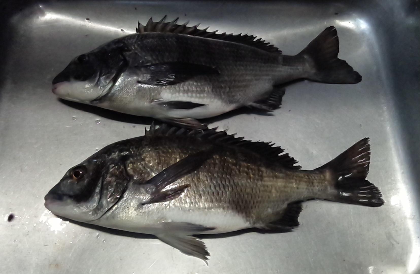 貯木場で40㎝級の大物釣れる(^^)vサムネイル