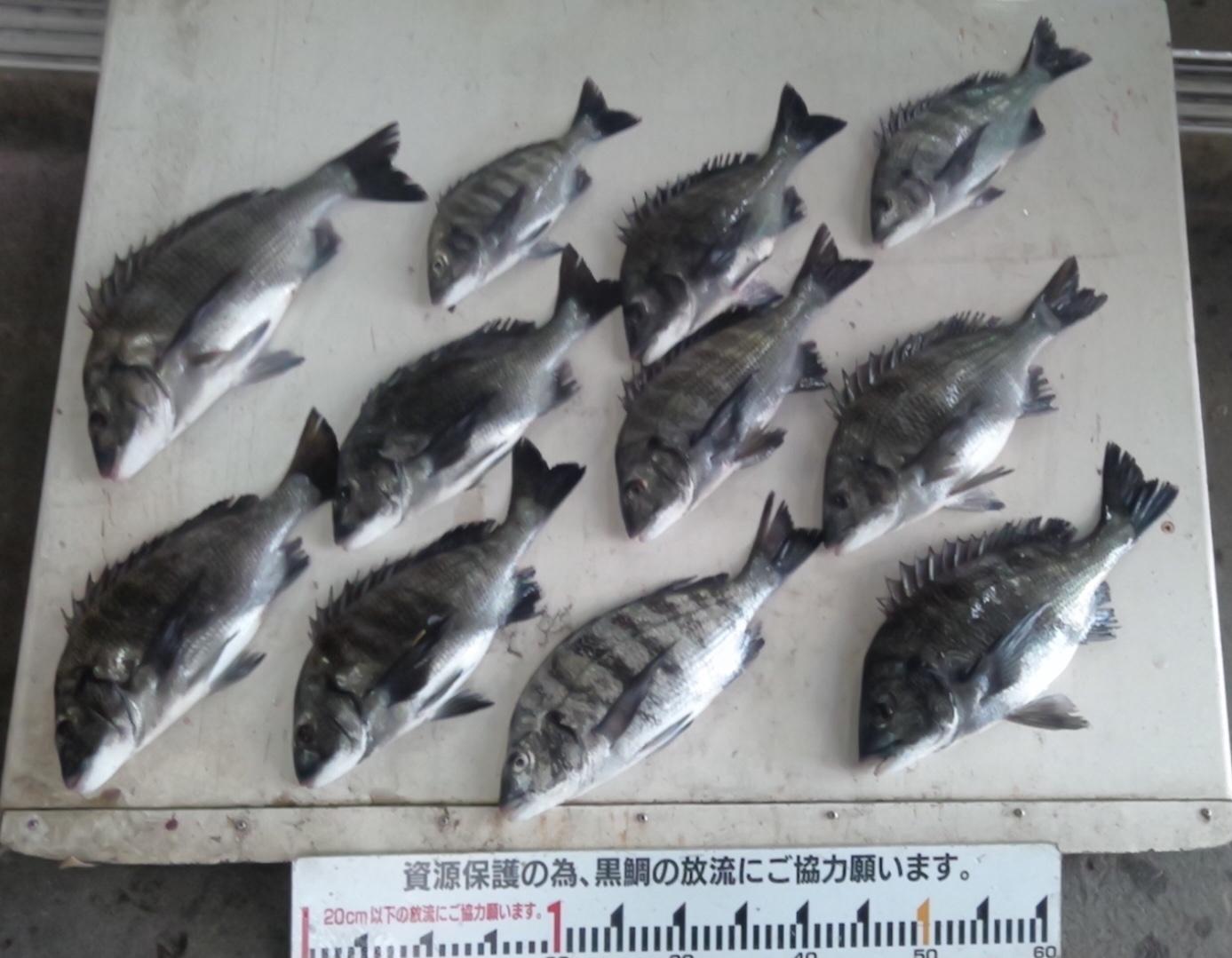 離岸堤で良型揃いで二桁釣果達成(^^)vサムネイル