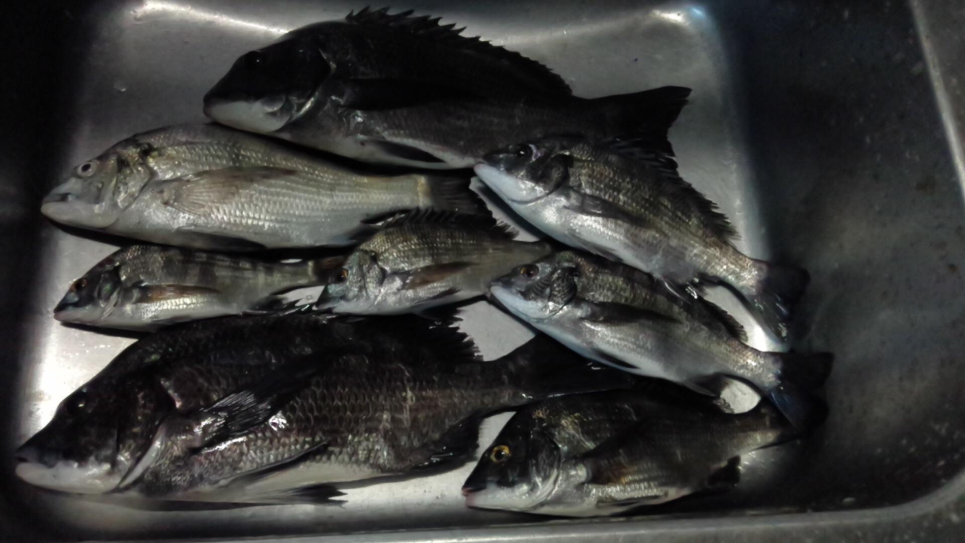 貯木場で好漁(^^)vサムネイル