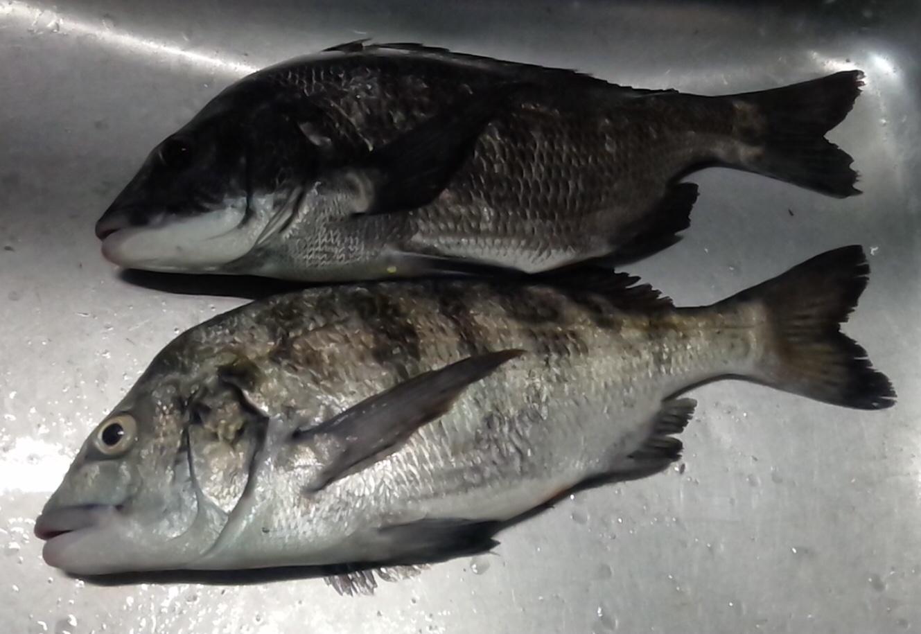 貯木場で大ヒラメゲットした後、40㎝級の大物釣れる(^^)vサムネイル