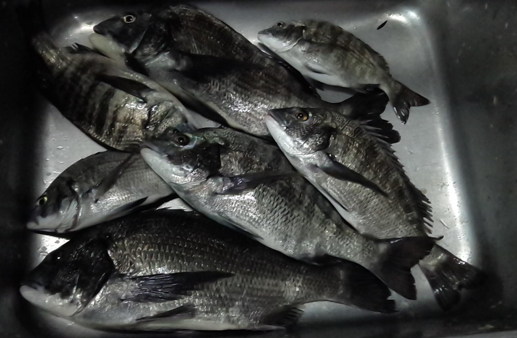 折戸で大釣り٩(^‿^)۶サムネイル