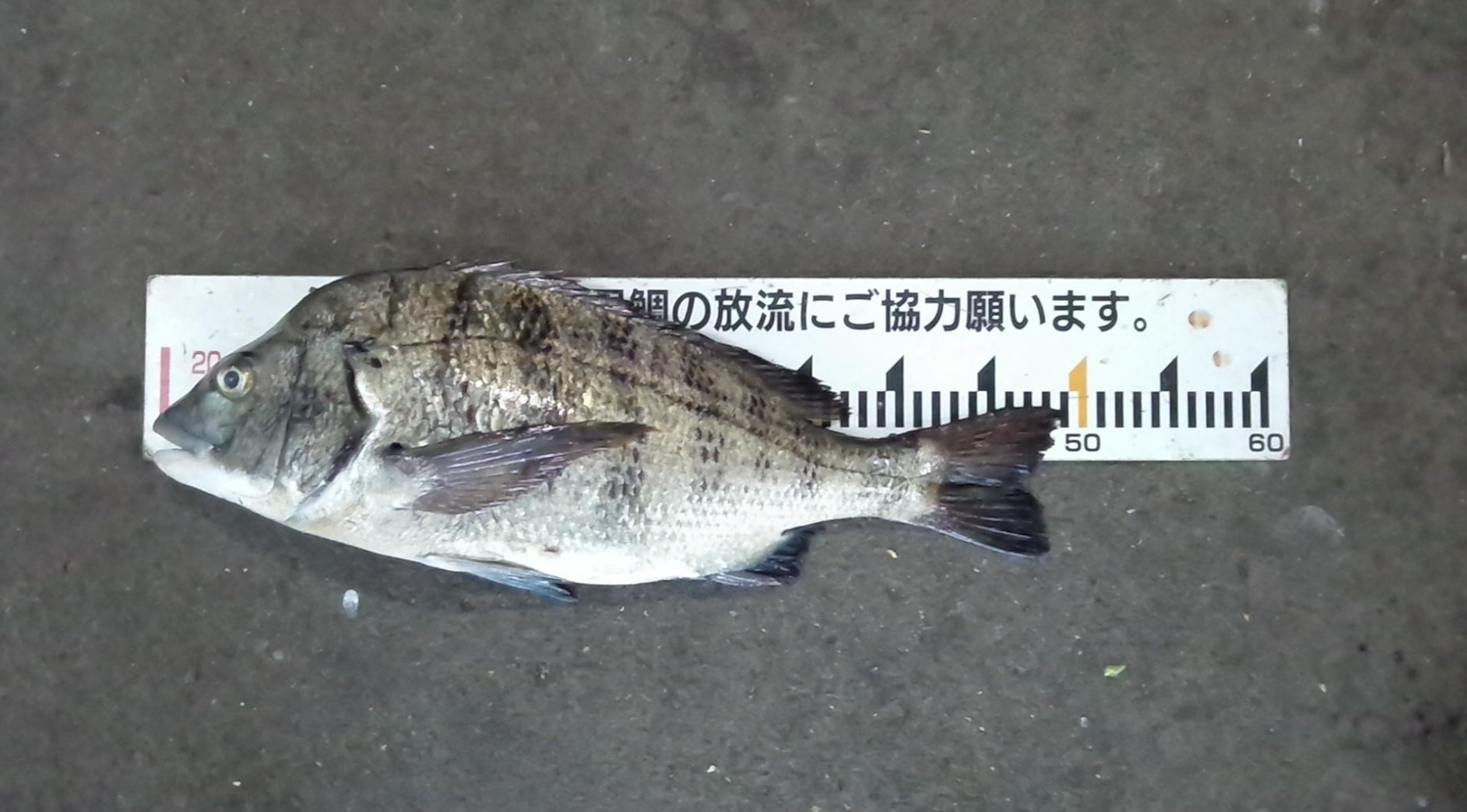 折戸で好漁*\(^o^)/*サムネイル