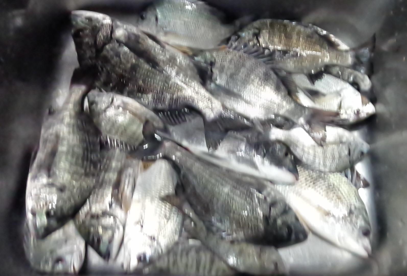 本日アブレなし❗️各所で好漁٩(^‿^)۶サムネイル